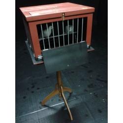 dove to rabbit cage