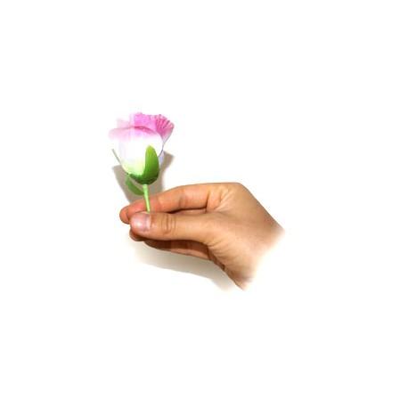 apparizione rose
